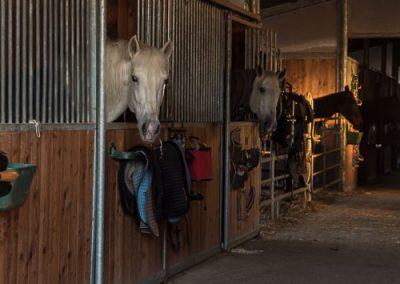 pensione per cavalli cavallonatura