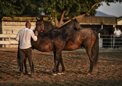 spettacoli equestri cavallonatura marina di grosseto