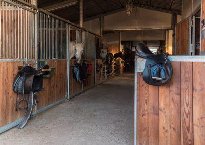 maneggio e pensione per cavalli marina di grosseto