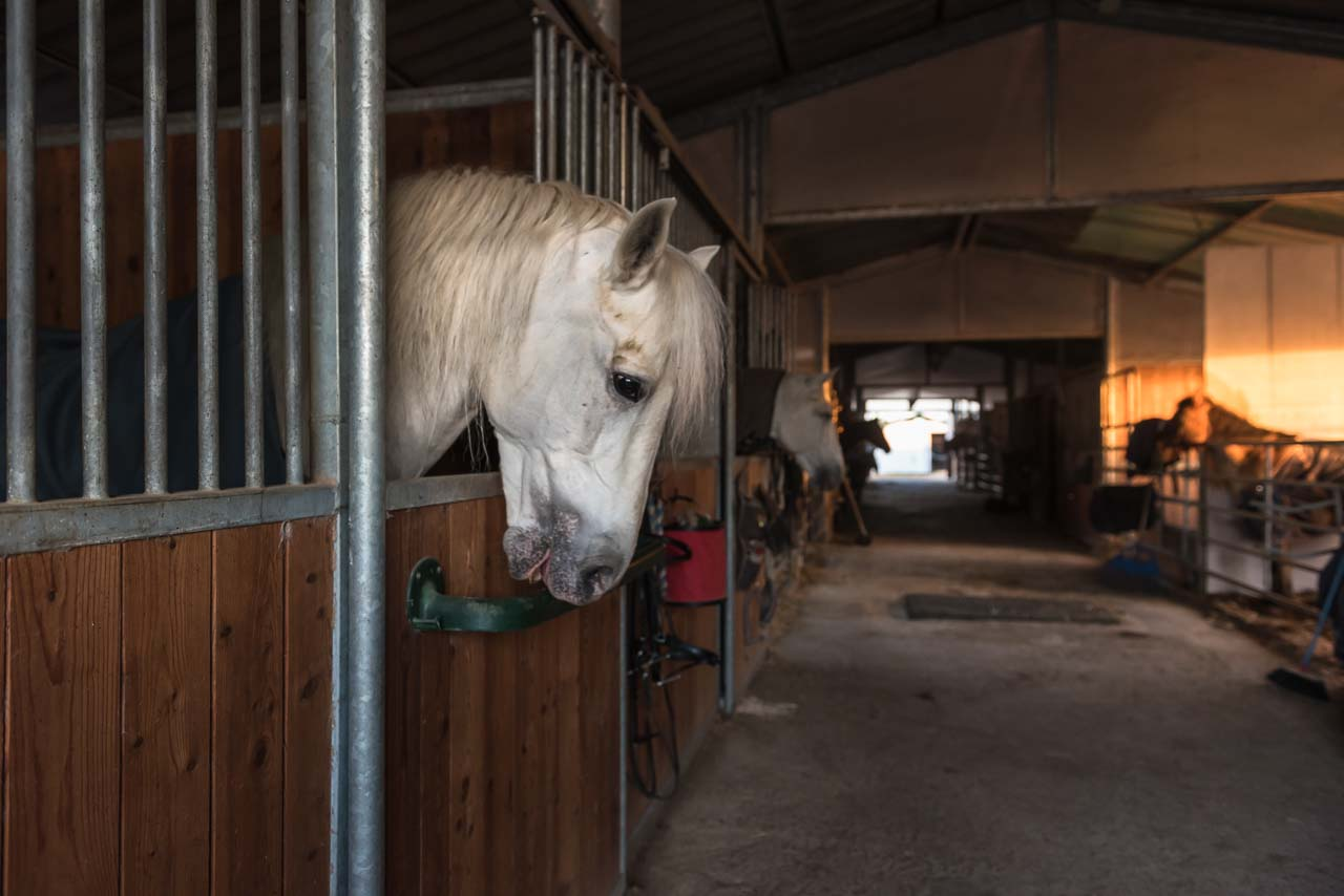pensione per cavalli marina di grosseto