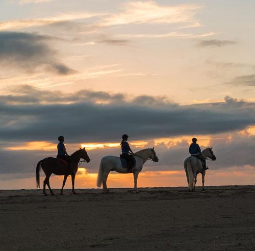 cavallo natura passeggiate a cavallo